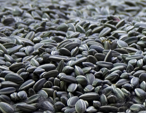 Ai Weiwei / 艾未未 : Sunflower Seeds