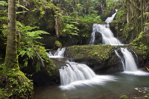 Jungle Waterfall, South Hilo, Hawaii