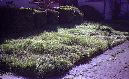 1049 weeds a
