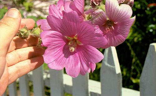 qflower A 6-11 1