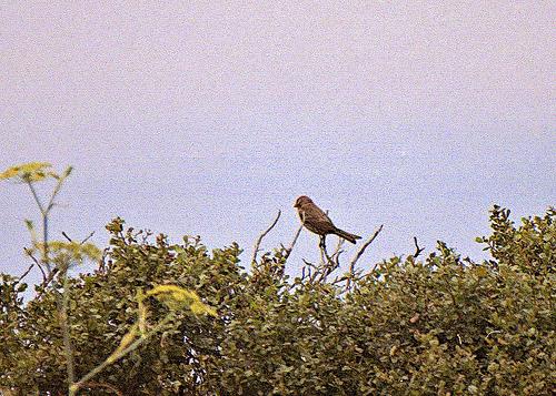 Qsparrow AB 11-15-11