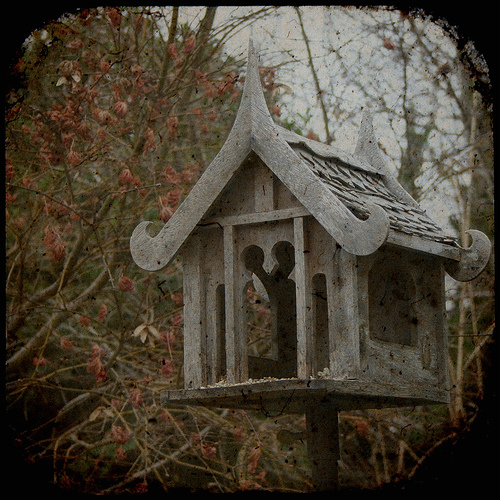 where the birds go