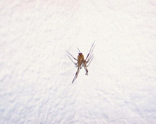corner spider