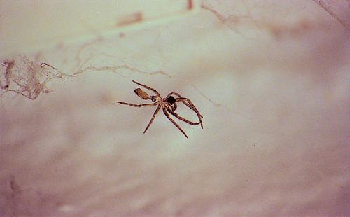Sink Spider Jan 2011