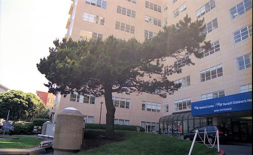 UCSF lone pine