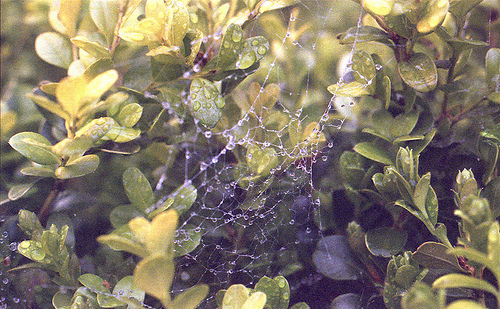 Boxwood Web BY 3-19-13