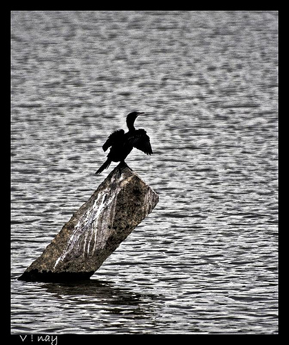 Cormorant silhouette...Am back finally,after a 5 month gap