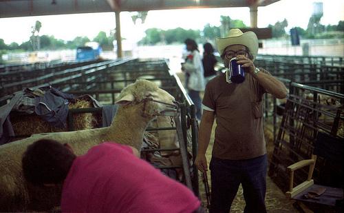 Sheep clip ACFG 1995