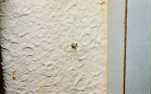 Kitchen corner Spider 1