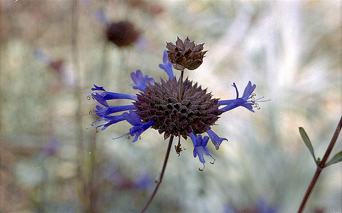 Qwildflower TRP 10-10-10
