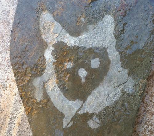 #190 Wet Rock Owl