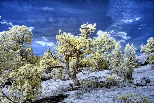 14 July 2012 Infrared HDR Garden of the Gods Colorado Springs