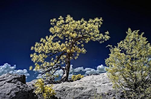 24 Aug 13 Infrared HDR Palmer Park Colorado Springs
