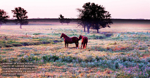 HORSES IN A BEAUTIFUL FIELD