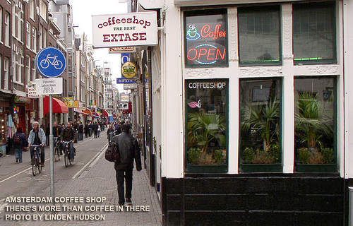 AMSTERDAM COFFEE SHOP - More Than Coffee