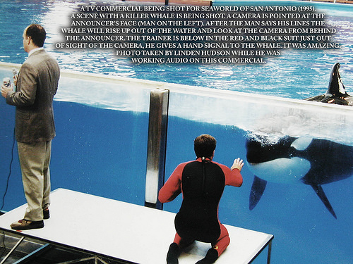 TV Commercial Shot With Killer Whale
