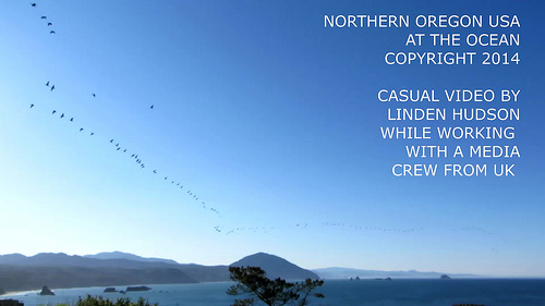 A MULTITUDE OF GEESE OVER THE OCEAN - VIDEO