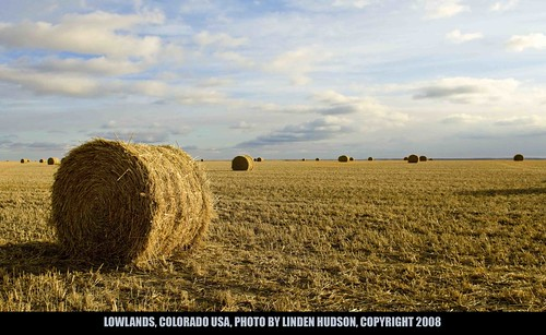 COLORADO LOWLANDS - HAY FIELD