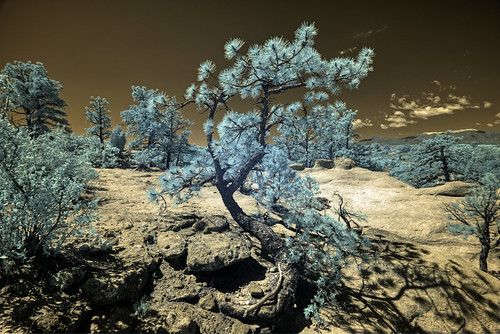 Infrared HDR Palmer Park, Colorado Springs